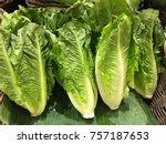 fresh romaine lettuce | Shutterstock . vector #757187653