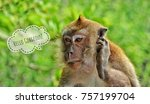 funny animal photo with hello... | Shutterstock . vector #757199704