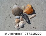 Collection Of Shells On Sand ...
