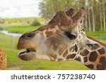 the head of a giraffe  eat.  | Shutterstock . vector #757238740