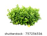 tropical plant green bush tree... | Shutterstock . vector #757256536