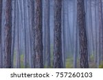forest trees on misty morning     Shutterstock . vector #757260103