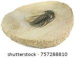 complete pyritised leonaspis ... | Shutterstock . vector #757288810