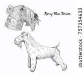 Kerry Blue Terrier Dog Sketch...