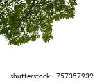 tree leaves and branch pendant... | Shutterstock . vector #757357939