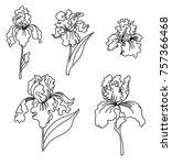 japanese iris flower set.hand...   Shutterstock .eps vector #757366468