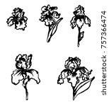 japanese iris flower set.hand...   Shutterstock .eps vector #757366474