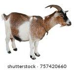 goat standing isolated on white ... | Shutterstock . vector #757420660