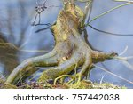 root of a tree immersed in the... | Shutterstock . vector #757442038