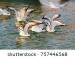 varanasi river  feb 18  2556 be ... | Shutterstock . vector #757446568