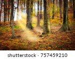 fairytale forest  deciduous...   Shutterstock . vector #757459210
