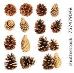 Set Of Cones Of Coniferous...