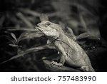 lizard  close up view | Shutterstock . vector #757483990