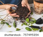 diseases of plants. limp leaves ... | Shutterstock . vector #757495354