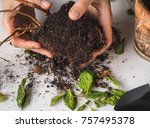diseases of plants. limp leaves ... | Shutterstock . vector #757495378