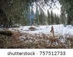Winter campfire with smoke at a campground in the Beaverhead-Deerlodge National Forest near Dillon, Montana