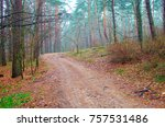magic forest in the fog | Shutterstock . vector #757531486