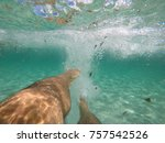 inside and up sea | Shutterstock . vector #757542526