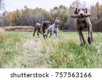 Stock photo dogs and nature 757563166