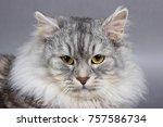 cat face portrait on grey... | Shutterstock . vector #757586734