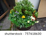 this is a photo of flower in...   Shutterstock . vector #757618630