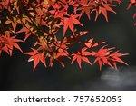 red japanese maple | Shutterstock . vector #757652053