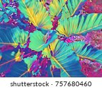 tropical foliage plant in sunny ... | Shutterstock . vector #757680460