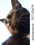 beautiful mustache black cat.   Shutterstock . vector #757710679