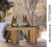 Small photo of red squirrels standing with a pool table