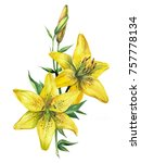 Watercolor Yellow Lily On A...