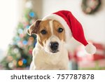 Stock photo merry christmas dog jack russell terrier in a house decorated with a christmas tree and gifts 757787878