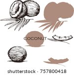 set  with coconut and leaves on ... | Shutterstock .eps vector #757800418