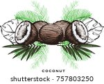 set with hand drawing coconut... | Shutterstock .eps vector #757803250