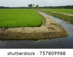 a view of paddy field | Shutterstock . vector #757809988