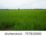 a view of paddy field | Shutterstock . vector #757810000