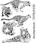 set of vector drawings on the... | Shutterstock .eps vector #757819150