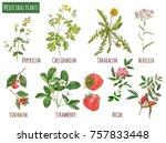 Set Of Medicinal Plants ...