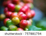 coffee beans ripening on coffee ... | Shutterstock . vector #757881754