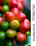 coffee beans ripening on coffee ... | Shutterstock . vector #757881760