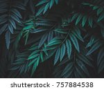 creative color texture of leaf  ... | Shutterstock . vector #757884538