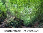 mountain river in the forest | Shutterstock . vector #757926364