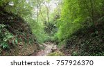 mountain river in the forest | Shutterstock . vector #757926370