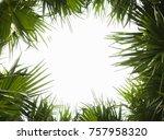 palm leaves against the white... | Shutterstock . vector #757958320