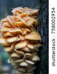 autumn forest. wood mushrooms... | Shutterstock . vector #758002954