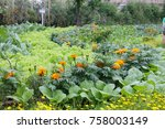 Cabbage And Marigold Are...