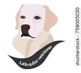 Labrador Retriever  Dog Head ...