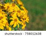 yellow flowers of heliopsis... | Shutterstock . vector #758012638