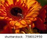 A Ladybug Decoration Sits On A...
