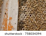 coffee beans being sorted into... | Shutterstock . vector #758034394