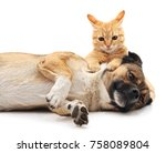 Stock photo brown puppy is playing for a kitten isolated on white background 758089804
